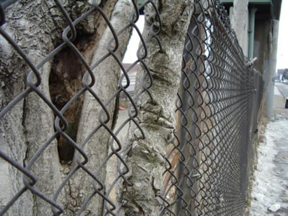 fence-tree-26_640x480